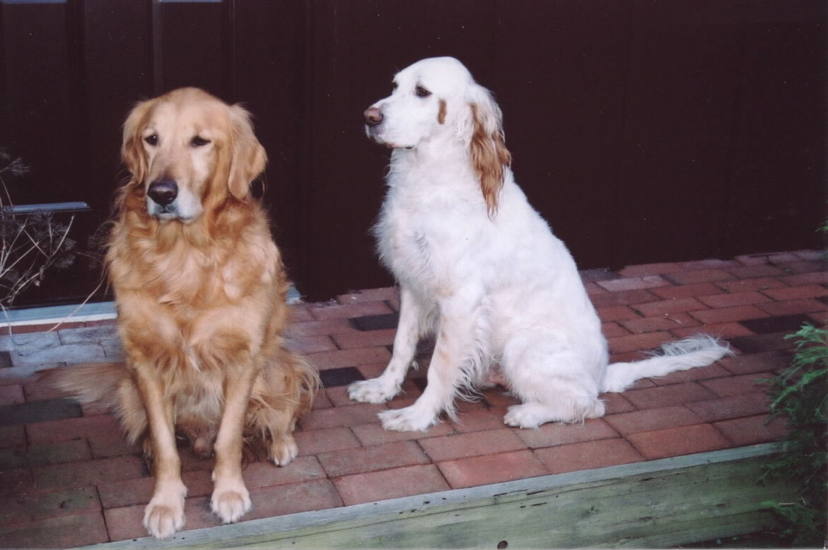 "Just a couple of ""Pound Puppies""...help a dog in need. Both gone now...but forever in our hearts."